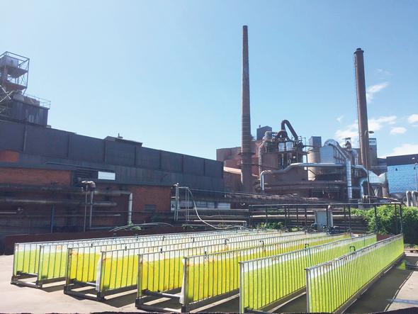 מערכת גידול האצות של אלגולנד במפעל היידלברג, שבדיה