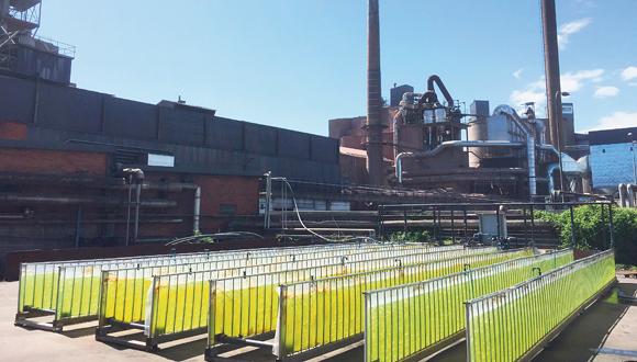 מפעל אצות בשוודיה
