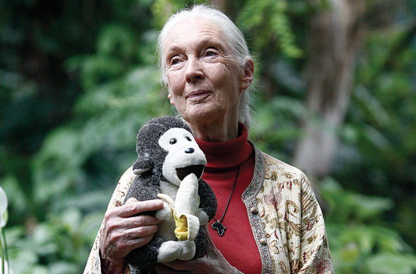 ג'יין גודול חוקרת טבע