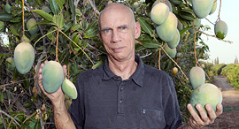 Gideon Gross at his mango plantation