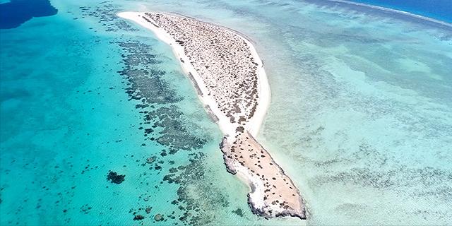 """רצועת החוף עליה מתוכנן הפרויקט.  ברנסון: """"זוהי באמת ובתמים סביבה ימית בראשיתית, אולי אחד מפלאי העולם הימיים האחרונים"""", צילום: Public Investment Fund"""
