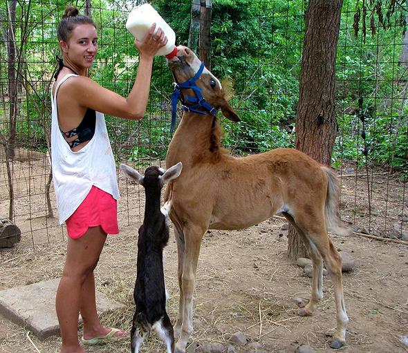קוסטה ריקה. The Monkey Farm שימור סביבתי ותמיכה בקהילות מקומיות