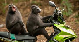 פוטו התמונות המצחיקות של חיות 2017 קופים , צילום: Katy laveck
