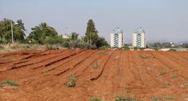 קרקע חקלאית מיועדת ל נדלן רחוב המייסדים פינת רחוב האגודה הוד השרון, צילום: נמרוד גליקמן