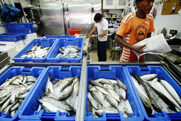 חנות הדגים של מוסי בשוק הכרמל, צילום: עמית שעל