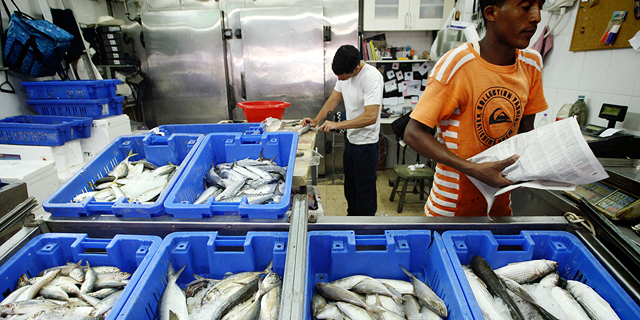 הפחתת המכסים על יבוא דגי מאכל נדחתה בשנה