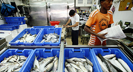 חנות דגים. מלחמת מכסים על הגב שלהם, צילום: עמית שעל