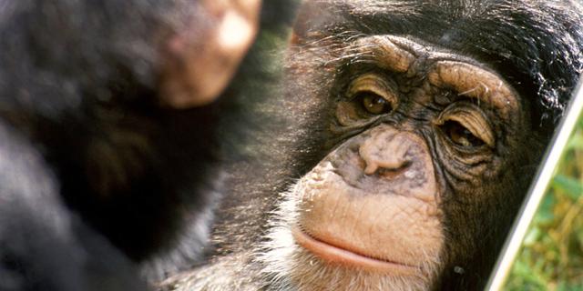 גם הקופים מודאגים מהעתיד: הזואולוג שמציג הוכחות לחוכמתם של בעלי החיים