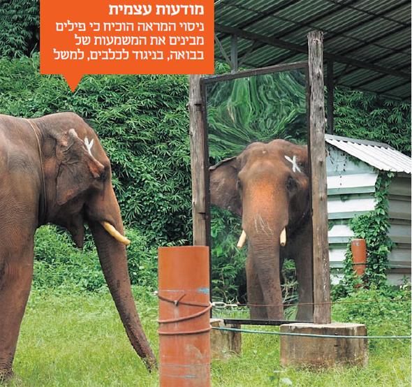 מודעות עצמית. ניסוי המראה הוכיח כי פילים מבינים את המשמעות של בבואה, בניגוד לכלבים, למשל