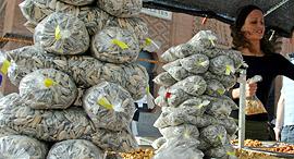 דוכן גרעיני חמנייה ב מדריד, צילום: בלומברג