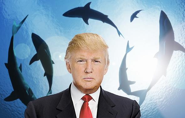 דונלד טראמפ והכרישים, צילום: שאטרסטוק, איי אף פי