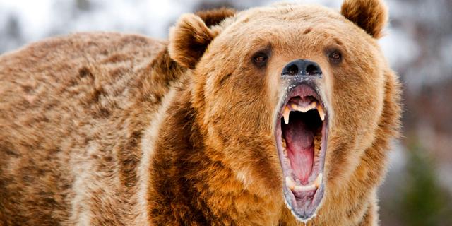 """וול סטריט: נאסד""""ק צלל ב-3.5%, מדד הפחד זינק ב-32%"""