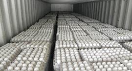 ביצים מוברחות זירת הבריאות, צילום: משרד החקלאות