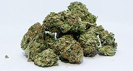 קנאביס 2 זירת הבריאות, צילום: gjbmiller-Pixabay