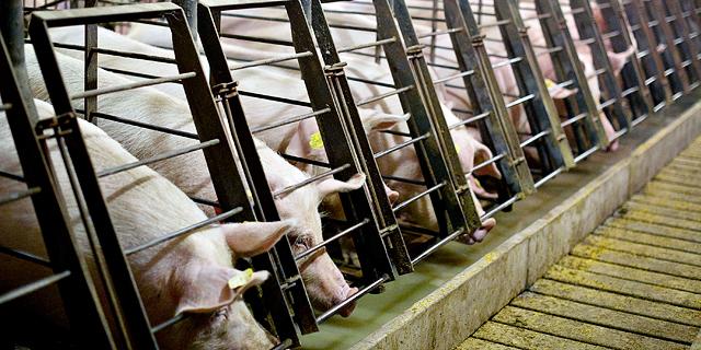מיטק מרחיבה פעילות: פועלת להדפסת בשר חזיר