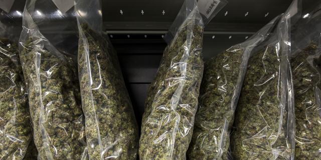 New Hurdles Stall Israeli Cannabis Export
