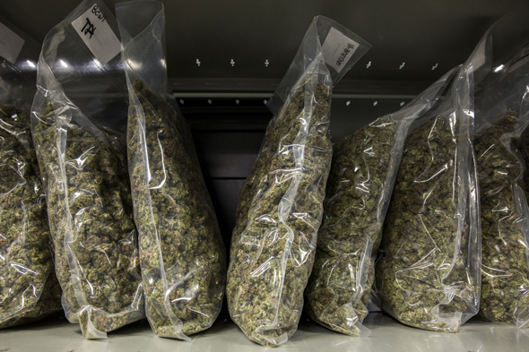 Cannabis. Photo: Bloomberg