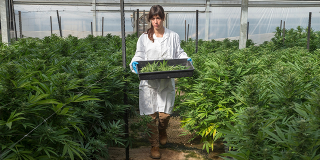 Israel's Kibbutzim Are Ahead of the Trend on Cannabis