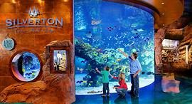 אקווריום אקוואריום מלון קזינו סילברטון לאס וגאס, צילום: Silverton