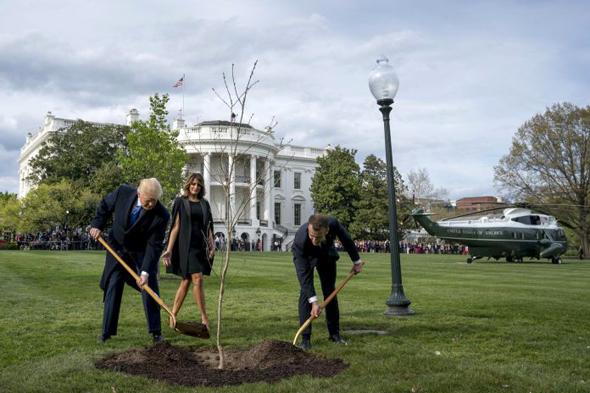 דונלד טראמפ ו עמנואל מקרון שותלים עץ ב בית הלבן, צילום: איי פי