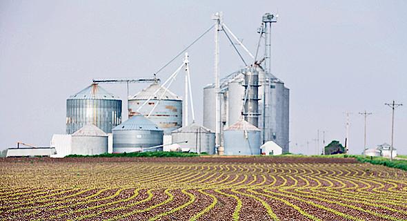 Field (illustration). Photo: Bloomberg