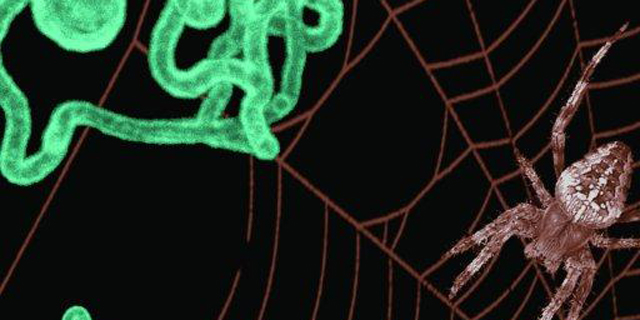 Startup Says It Is First to Copy Spider's Silk Spinning Process
