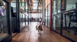 """מגזין נדל""""ן 30.5.18 מי יפול חלל משרדי מיינדספייס חלל עבודה תל אביב, צילום: אוראל כהן"""