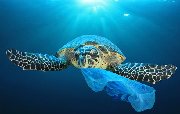 Plastic pollution. Photo: Shutterstock