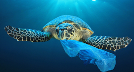 Plastic pollution. Photo: Shutterstock