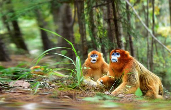 קוף קופים ג'ונגל טבע יער, צילום: שאטרסטוק