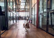 """מגזין נדל""""ן 30.5.18 מי יפול חלל משרדי מיינדספייס חלל עבודה תל אביב"""