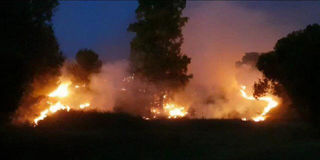 טרור העפיפונים: שריפה גדולה ביער שוקדה