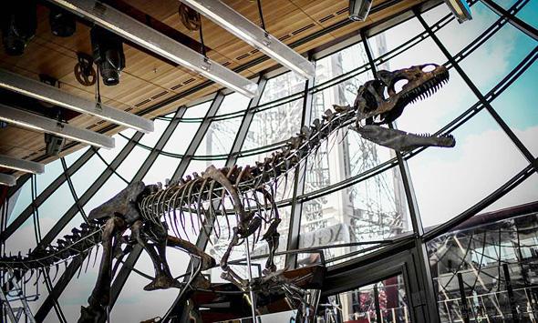 שלד הדינוזאור שנמכר במכירה פומבית, צילום: איי אף פי