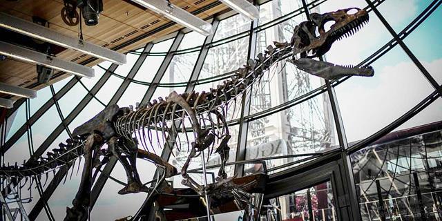 מי רוצה דינוזאור בבית? שלד ענק נמכר לקונה פרטי ב-2 מיליון דולר