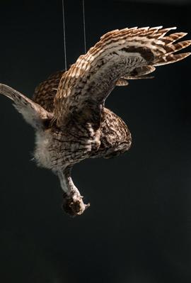 """חי, צומח: מוזיאון הטבע החדש בת""""א"""
