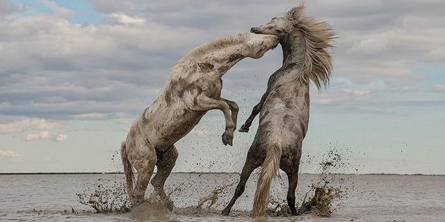 יופי של תמונות: הזוכים בתחרות צילומים של חברה אמריקאית להגנת הטבע