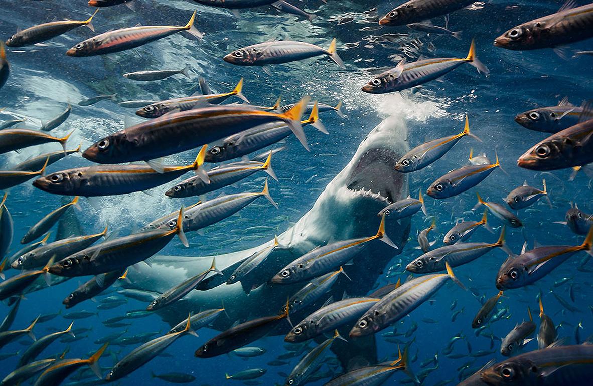 צילום: the nature conservancy - Roberto Moccini Formiga