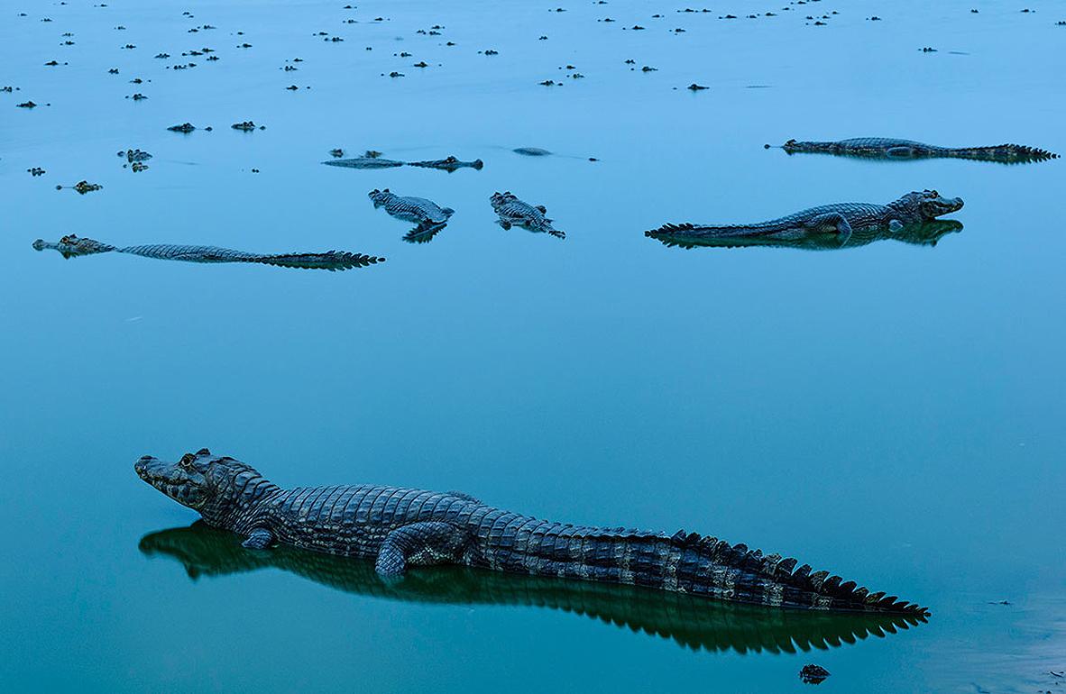 צילום: the nature conservancy - orge André Diehl
