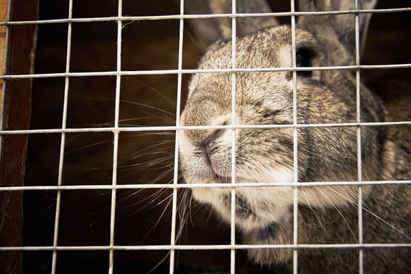 התוכנה תשחרר את בעלי החיים - לפחות בעולם המערבי