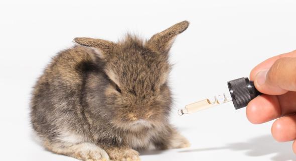 ארנבון ומדען