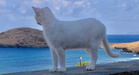 חתולים אי סירוס יוון, צילום: God's Little People Cat Rescue
