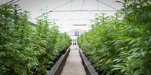After a Year of Disappointments, the Israeli Cannabis Industry Pins its Hopes on 2020
