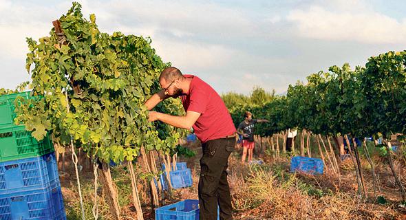 מלימודי ייצור היין. 35–95 אלף שקל לשנה