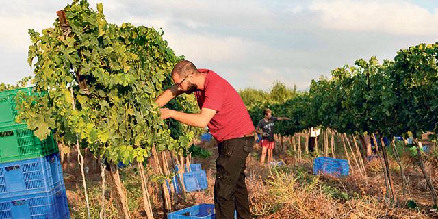 בקבקתי לבד: מסלול לימודים מציע הכשרה לייצור יין