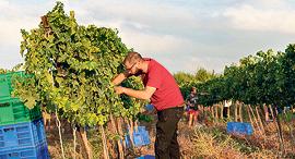 מלימודי ייצור היין