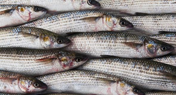 Fish (illustration). Photo: Shutterstock