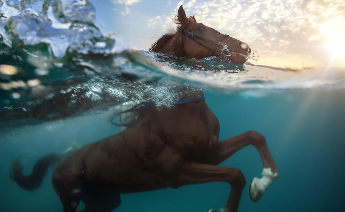 פוטו חיות שוחות סוסים , צילום: שאטרסטוק