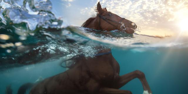 יש דגים בים? כן, וגם סוסים, חזירים וגמלים