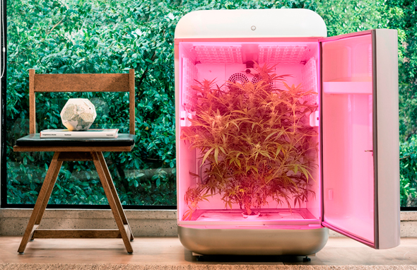 Seedo's home farming device. Photo: Raz Menashe