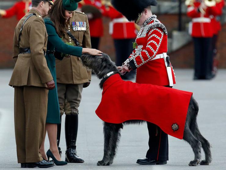 הנסיכה קייט מידלטון עם וולפהאונד אירי , צילום: רויטרס